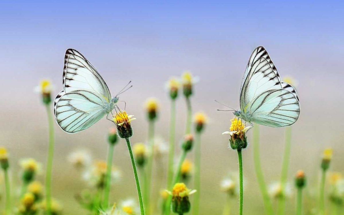 butterfly-1127666_1280_optimized