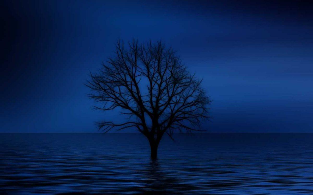 tree-738816_1280_optimized